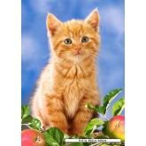 Jigsaw puzzle 60 pcs - Kitten with Apples (by Castorland)