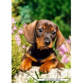Jigsaw puzzle 120 pcs - Puppy Looking for the Master (by Castorland)
