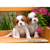 Jigsaw puzzle 120 pcs - Spaniel Puppies (by Castorland)