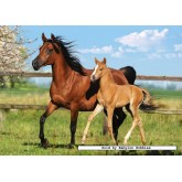 Jigsaw puzzle 260 pcs - Mare and Foal (by Castorland)