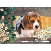 Jigsaw puzzle 500 pcs - Take Me Home (by Castorland)