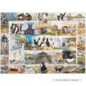 1000 pcs - Fishermen's Friends (by Gibsons)