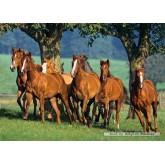 Jigsaw puzzle 1500 pcs - Quarter Horses (by Castorland)