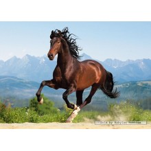 Jigsaw puzzle 1500 pcs - Galloping Andalusian (by Castorland)