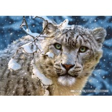 Jigsaw puzzle 1500 pcs - Snow Leopard (by Castorland)