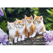 Jigsaw puzzle 1000 pcs - The Cat Crew (by Castorland)