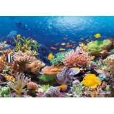 Jigsaw puzzle 1000 pcs - Coral Reef Fishes (by Castorland)