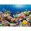 1000 pcs - Coral Reef Fishes (by Castorland)