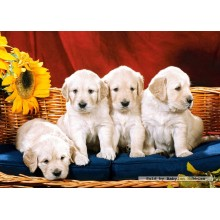 Jigsaw puzzle 1000 pcs - Puppies With Sunflower (by Castorland)