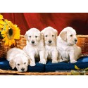 1000 pcs - Puppies With Sunflower (by Castorland)