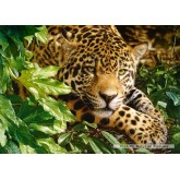 Jigsaw puzzle 1000 pcs - Leopard at Rest (by Castorland)
