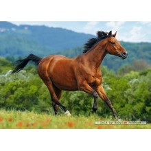 Jigsaw puzzle 1000 pcs - Reddish-brown horse (by Castorland)
