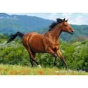 1000 pcs - Reddish-brown horse (by Castorland)