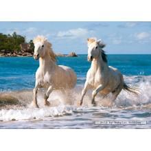 Jigsaw puzzle 1000 pcs - White Camargue Horses (by Castorland)