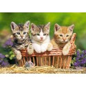 500 pcs - Three Lovely Kittens (by Castorland)