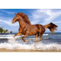 500 pcs - Horse on the Beach (by Castorland)