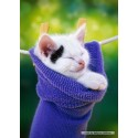 500 pcs - Kitten in a Sock (by Castorland)