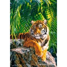Jigsaw puzzle 500 pcs - Sumatran tigress (by Castorland)