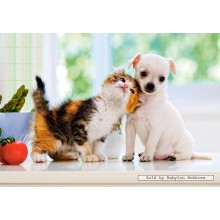 Jigsaw puzzle 500 pcs - Chihuahua Puppy and Kitten (by Castorland)