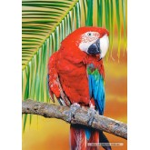 Jigsaw puzzle 500 pcs - Green-Winged Macaw (by Castorland)