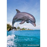 Jigsaw puzzle 500 pcs - Dolphin (by Castorland)