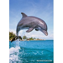 Jigsaw puzzle 500 pcs - Dolphin (by Castorland)