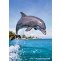 500 pcs - Dolphin (by Castorland)