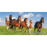 Jigsaw puzzle 4000 pcs - Paso Fino Herd (by Castorland)