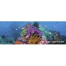 Jigsaw puzzle 2000 pcs - Coral Reef - Alexander von Humboldt (by Heye)