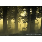 Jigsaw puzzle 1000 pcs - Deer  - Magic Forest (by Heye)