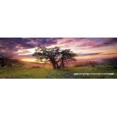 Jigsaw puzzle 2000 pcs - Oak Tree  - Alexander von Humboldt (by Heye)
