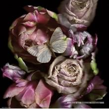 Jigsaw puzzle 1000 pcs - Butterfly  - Weingarten (by Heye)