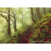 Jigsaw puzzle 1000 pcs - Path  - Magic Forest (by Heye)