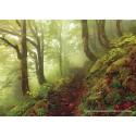 1000 pcs - Path  - Magic Forest (by Heye)
