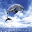 1000 pcs - Dolphin - Weingarten (by Heye)