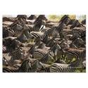 500 pcs - Herd of Zebras - Impossible (by Educa)