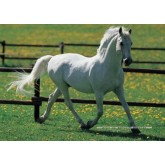 Jigsaw puzzle 500 pcs - White Horse (by Educa)