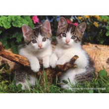 Jigsaw puzzle 1000 pcs - Two Kittens (by Jumbo)