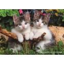 1000 pcs - Two Kittens (by Jumbo)