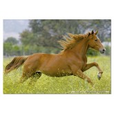 Jigsaw puzzle 1000 pcs - Galloping - Genuine (by Educa)
