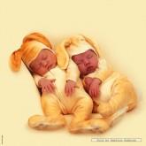 Jigsaw puzzle 1000 pcs - Baby Bunnies - Anne Geddes (by Schmidt)