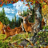 Jigsaw puzzle 1000 pcs - In the Forest - Square (by Schmidt)