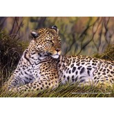 Jigsaw puzzle 1000 pcs - King of the Savannah (by Schmidt)