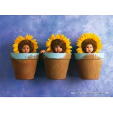 Jigsaw puzzle 1000 pcs - Sunflower Trio - Anne Geddes (by Schmidt)
