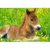 Jigsaw puzzle 150 pcs - Cute Foal (by Schmidt)