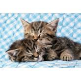Jigsaw puzzle 200 pcs - Cat Friends (by Schmidt)