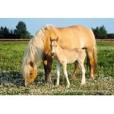 200 pcs - Mare with Foal (by Schmidt)