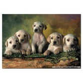 500 pcs - Labrador Retrievers (by Educa)