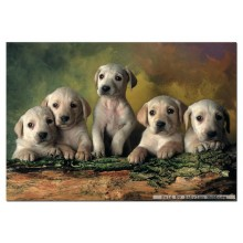 Jigsaw puzzle 500 pcs - Labrador Retrievers (by Educa)