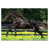 500 pcs - Galloping - Genuine (by Educa)
